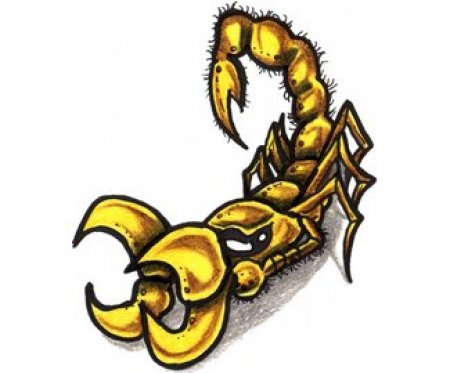 Эскизы скорпиона часть 1