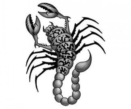 Эскизы черно белые скорпиона часть 2