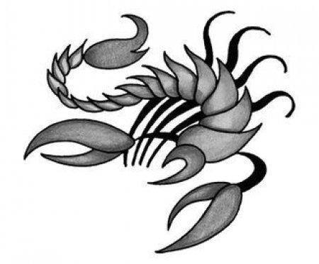 Эскизы черно белые скорпиона часть 3