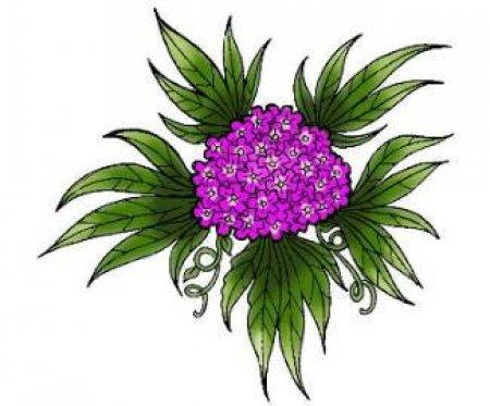 Эскизы цветов. Часть 7