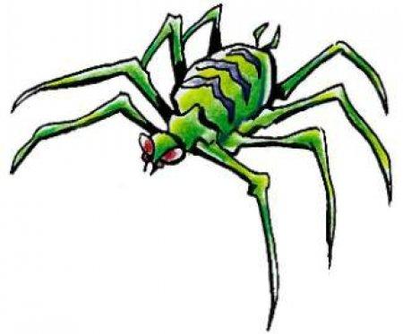 эскизы пауков: