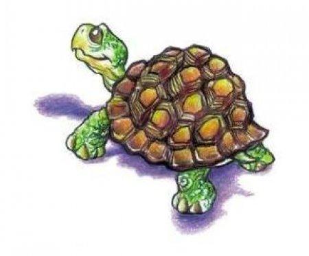 Эскиз татуировки черепахи